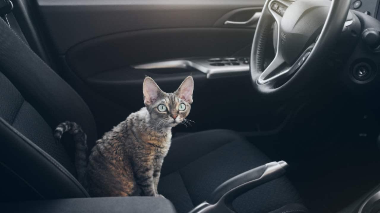 Cómo acostumbrar al gato al coche: los distintos pasos para hacer que el viaje sea tranquilo